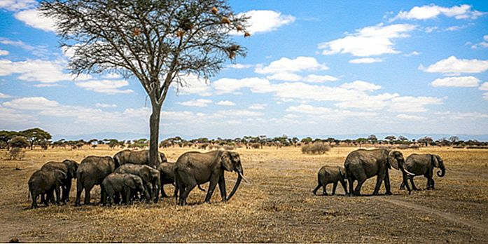 Top 10 Nationalparks & Reservate in Tansania (Die ultimative Tansania-Safari)